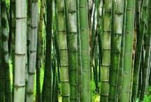Bamboo Food Truck
