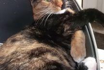 Adopt a cat ! / Nu cumpara, adopta o pisica !