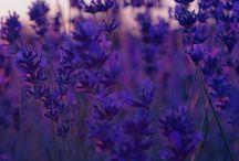 Flowers ~ Plants