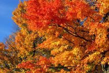 Autumn in New England / It is Well with My Soul / by Mary Shull
