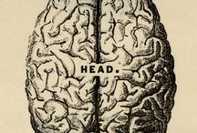 Brain / by Thal Ul