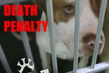 ♀Spay & ♂Neuter / Compelling messages for ♀Spay & ♂Neuter