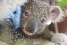 Australia - Animales, flora y fauna