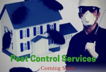 Pest control in Bangalore / Need to control pest? Find a pest control solution with gapoon which provides trusted and verified professionals for pest control which includes Ant,Cockroach,Bedbugs,Termite,Mosquitoes/Flies,Honey-Bees and other pests control. (http://www.gapoon.com/pest-control-services-bangalore)