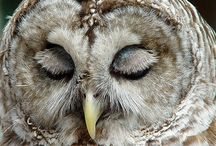 Owls / by Dodie Dee