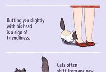 Everything about cats