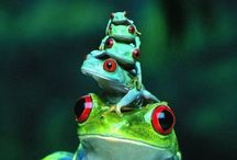 Animals fauna