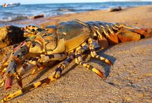 Nature / Torres Strait wildlife