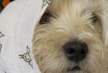 Søde hunde / Bløde hunde