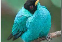Bird is the Word / by Jaime RispoliRoberts