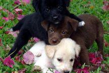 Eadaoin / Dogs