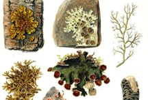 moss & lichen & algae