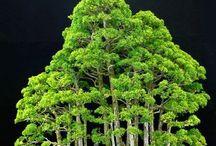 forest bonsai / yosa ue