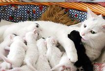 Gatos Y Gatitos