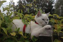 FREYA & XANIA !! British shorthair cat & Yorkshire Terrier :) / MY LOVE  -  FREYA the cat & XANIA the dog :)