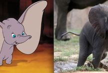 Adorable Disney Animals In Real Life