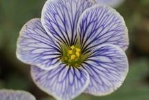 flower-list