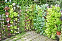 Jardins potagers verticaux