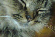my cat /