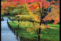 momiji kouyou  leaf / by Kazumi Iitaka