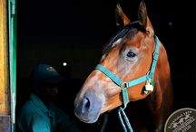 National Yearling Sales 2014 / National Sales Yearlings - Champion Thoroughbred Horses at Summerhill Stud, KZN, South Africa