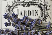 *Lavendel*