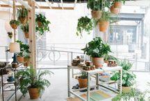 plants + decor