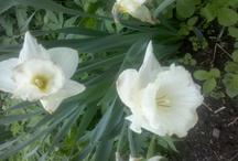 Garden Flowers from my Northern Garden / by Vintage Patterns Dazespast