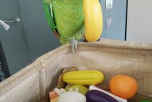 Rita, my blue fronted amazon parrot