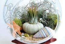 Dry terrarium