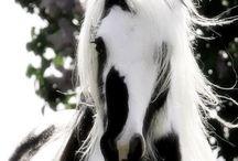 cavalli♡
