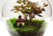 Jardines miniatura / Terrarios, micro jardín