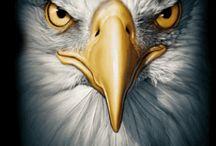 aguias e arquetipos