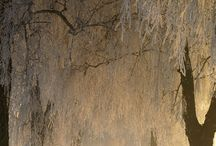 Natural World / by cynthia malbon