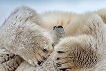bearlove