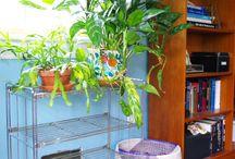 Home: plant Storage