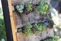Apartment Balcony Garden Ideas / by Maggie Hartley Mitchell