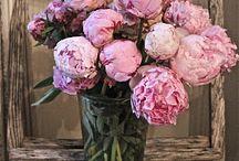 My Dad s Favorite Flower / by Steve Alter