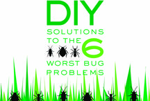 Bug solutions