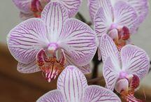 Orchideen/Tip's/Plege