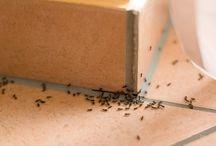 Astuces pour se débarrasser de petites bêtes dans la maison