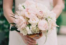 blush bouquets / by Mallory Joyce Design
