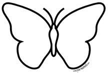 papillons chenilles