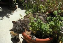 Plants for cats / Cats plants