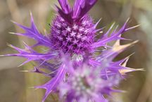 18 Lesser-Known Texas Wildflowers / 18 lesser-known Texas wildflowers from the Lady Bird Johnson Wildflower Center's special collection for  Texas Co-op Power. Sniff out more wildflowers in our April 2015 issue or online at http://www.texascooppower.com/texas-stories/nature-outdoors/its-wild-out-there.