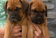 pups. / by Aboriginality