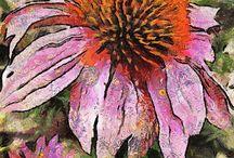 maľované kvety 2 / echinacea