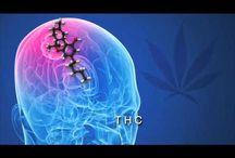 Organic Medical Cannabis Oil