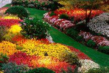 Garten / by Diehaushaltshilfen Gmbh