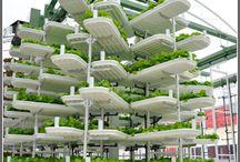 sustainability / by Kimberlee Prokhorov